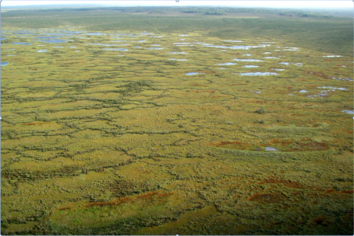 Arctic peatlands may play a more beneficial role in the global carbon cycle than previously thought