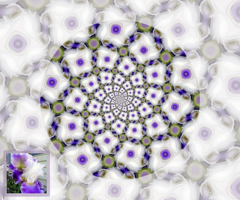 iris spiral