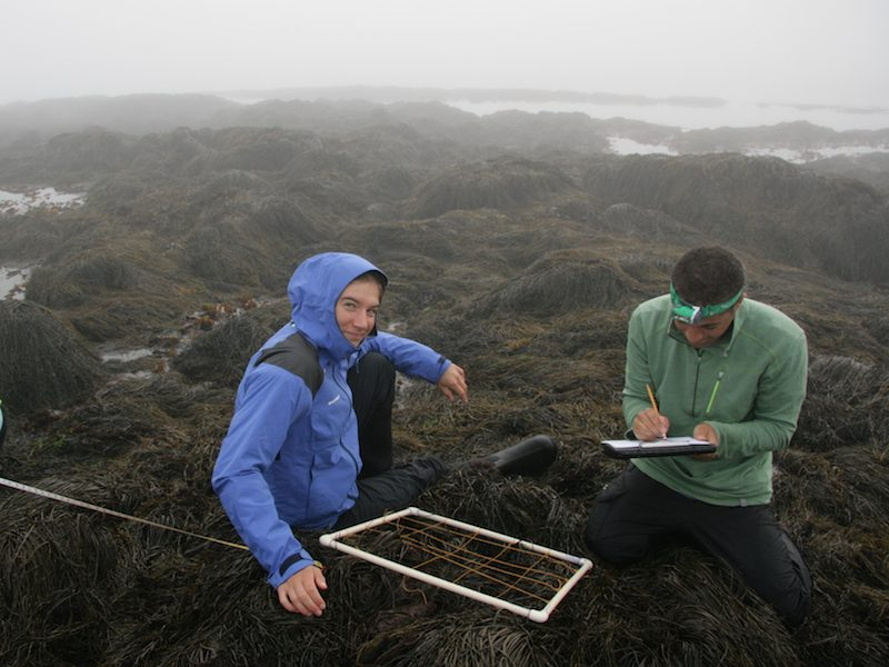 Hannah Miller '17 and Sam Walkes '18, of the 2016 Bowdoin Marine Science Semester class, count species of algae and animals in an intertidal quadrat on Kent Island.