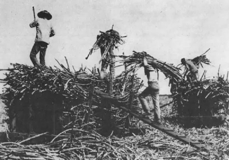 chinese farm workers in hawai'i