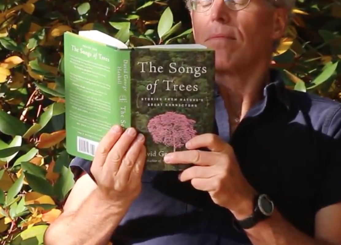 songs of trees book