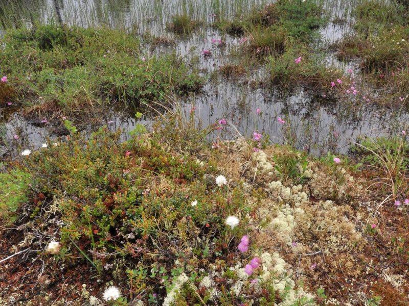Wet bog image