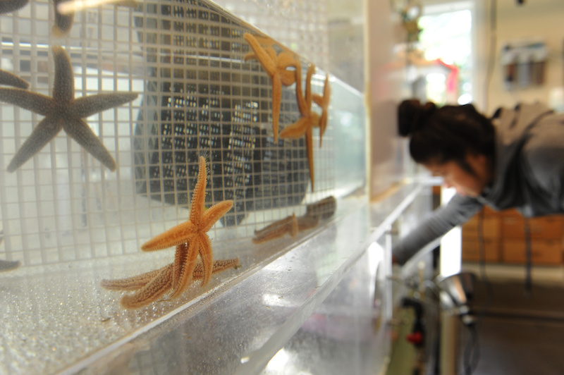 Starfish in a tank