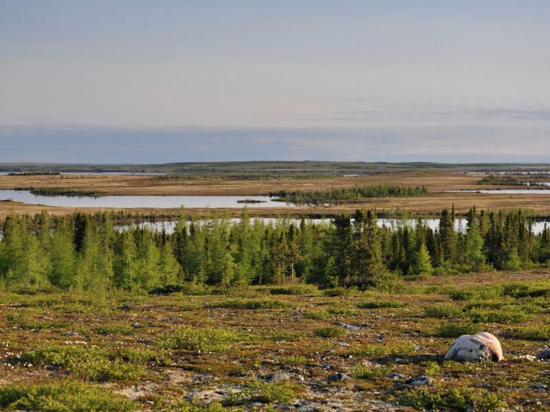 Low arctic tundra landscape